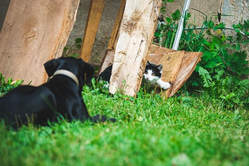 tabby cat and dog cuddling