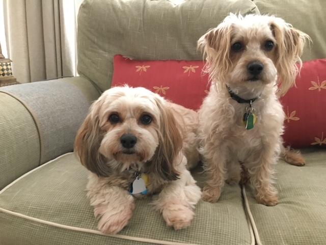 Sadie and Benny